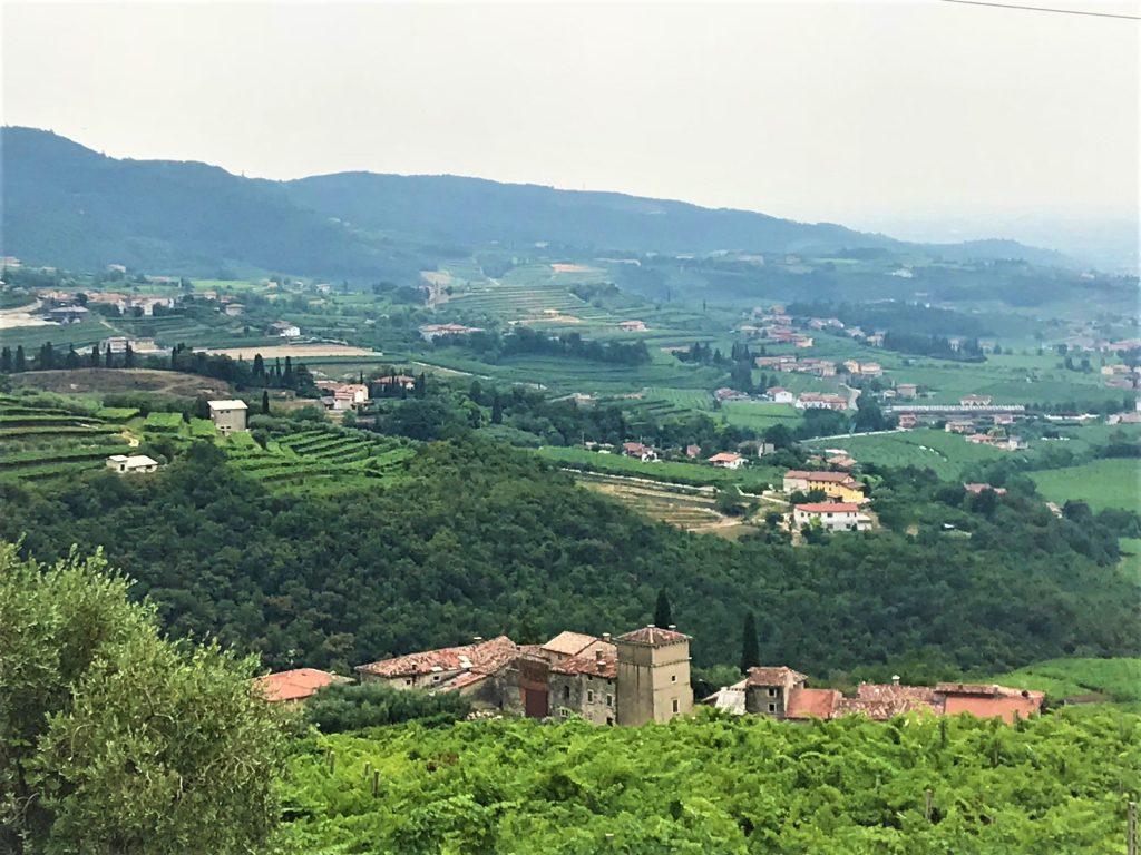 Vineyards in the Veneto, Italy