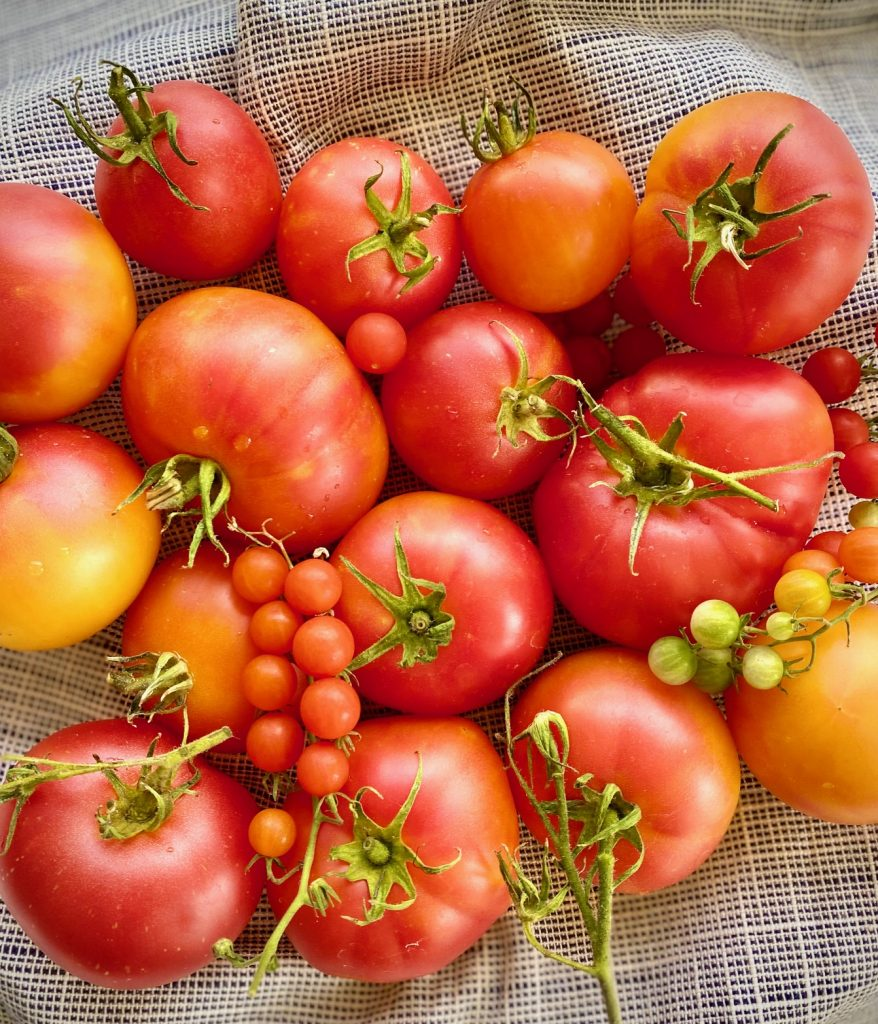 A bunch of Heirloom Tomatoes