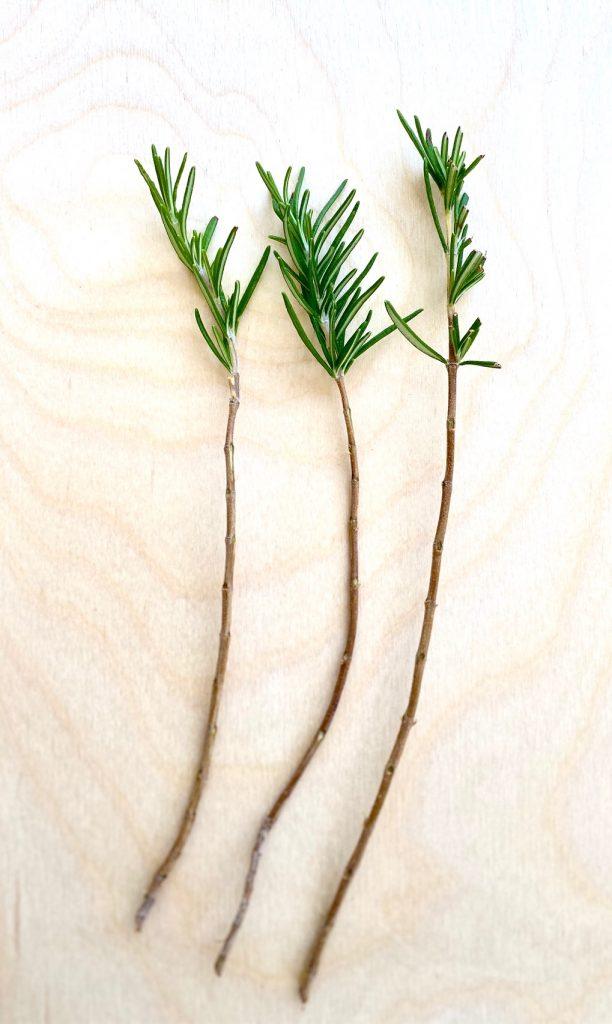 3 Stripped Rosemary Sprigs